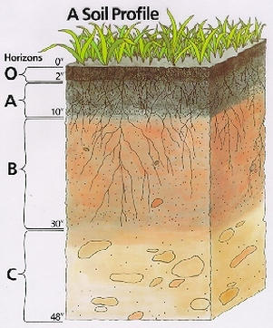 Soil horizons ninja 39 s portal to science for Why the soil forms layers in water